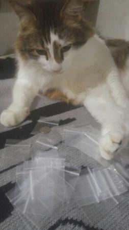 50 pc  1.5 x 1.5 inch zip lock plastic bags mini dime size b