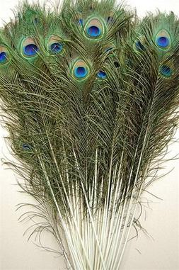 "25 Pcs Peacock Feathers 50""-55"""